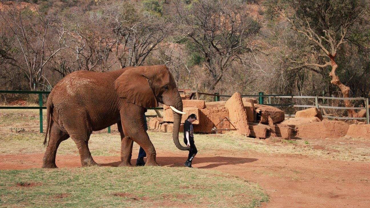Elephant & Monkey Sanctuary Tour